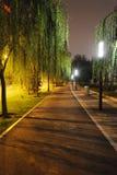 Percorso di pietra con gli alberi alla notte Immagini Stock