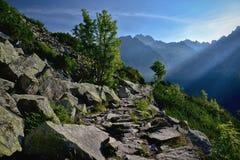 Percorso di pietra della montagna nell'alta montagna di tatra della foresta Fotografia Stock