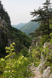 Percorso di pietra nelle montagne di Cerna Fotografia Stock Libera da Diritti