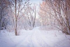 Percorso di Snowy attraverso gli alberi Immagini Stock Libere da Diritti