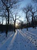 Percorso di Snowy in Mont-reale fotografie stock