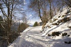 Percorso di Snowy in una foresta della montagna Fotografia Stock