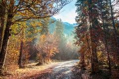 Percorso di trekking in un giorno di autunno nelle alpi Fotografie Stock
