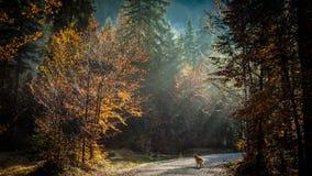 Percorso di trekking in un giorno di autunno nelle alpi Fotografia Stock