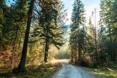 Percorso di trekking in un giorno di autunno nelle alpi Immagini Stock Libere da Diritti