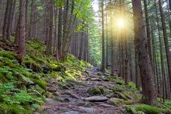 Percorso di Wallking in foresta Fotografia Stock