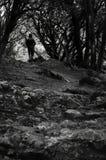 Percorso duro al foro negli alberi fotografia stock