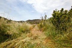 Percorso falciato attraverso erba lunga, regione di Valencia, Spagna immagini stock