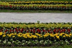 Percorso floreale Immagini Stock