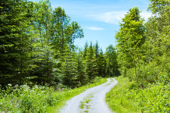Percorso in Forest Daytime Footpath che fa un'escursione la st del parco di scalata di montagna fotografia stock