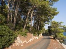 Percorso - foresta fotografia stock