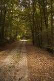 Percorso in foresta Fotografia Stock