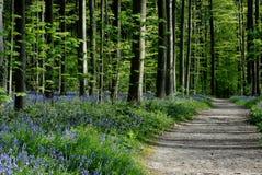 Percorso in foresta immagini stock