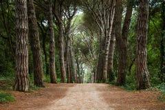 Percorso in foresta Fotografia Stock Libera da Diritti