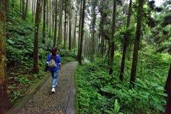 Percorso in foresta Immagine Stock