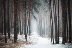 Percorso in foresta di conifere nell'inverno Fotografia Stock