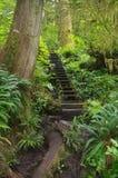 Percorso in foresta pluviale temperata Fotografia Stock Libera da Diritti