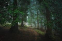 percorso in foresta scura nebbiosa fotografia stock