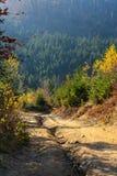 Percorso in foresta sempreverde, montagne carpatiche, Ucraina Viaggio, ecoturismo Immagini Stock