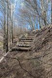 Percorso in foresta sulla montagna Fotografia Stock
