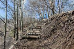 Percorso in foresta sulla montagna Fotografia Stock Libera da Diritti