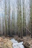 Percorso in foresta sulla montagna Immagine Stock Libera da Diritti