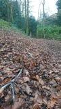 Percorso frondoso del pavimento del terreno boscoso Fotografia Stock Libera da Diritti