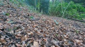 Percorso frondoso 2 del pavimento del terreno boscoso Fotografia Stock Libera da Diritti