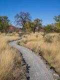 Percorso grigio della ghiaia con le lampade che conducono attraverso l'alta erba asciutta all'albero del baobab, Botswana, Africa Immagine Stock