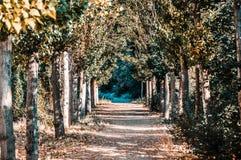Percorso incredibile attraverso la foresta circondata dagli alberi immagini stock libere da diritti