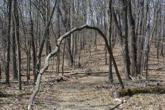 Percorso incurvato di escursione e dell'albero Fotografia Stock Libera da Diritti