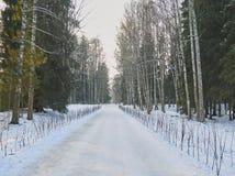 Percorso innevato nel parco di inverno Immagini Stock Libere da Diritti