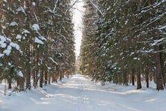 Percorso innevato nel parco di inverno Fotografie Stock Libere da Diritti