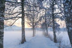 Percorso IV della betulla di Snowy Fotografie Stock Libere da Diritti