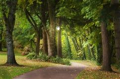 Percorso magico del terreno boscoso Fotografia Stock