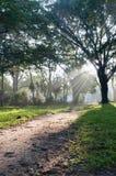 Percorso Mystical in foresta tropicale immagine stock