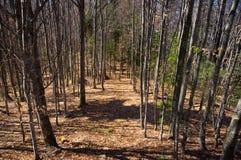 Percorso naturale nel legno fotografia stock