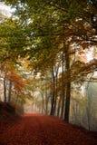 Percorso nebbioso di autunno Fotografie Stock