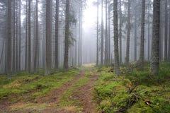 Percorso nebbioso misterioso attraverso la foresta, repubblica Ceca, Europa immagini stock libere da diritti