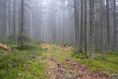 Percorso nebbioso misterioso attraverso la foresta, repubblica Ceca, Europa fotografia stock