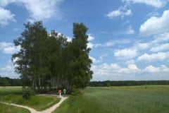 Percorso negli alberi Fotografia Stock Libera da Diritti