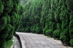 Percorso nei bordi del giardino con l'albero di cipresso Immagine Stock
