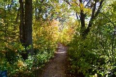 Percorso nel legno di autunno Fotografia Stock Libera da Diritti
