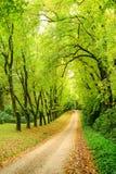 percorso nel legno in primavera Immagini Stock Libere da Diritti