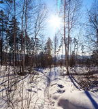 Percorso nel sole soleggiato di inverno della foresta Fotografia Stock Libera da Diritti