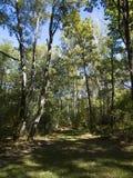 percorso nella foresta Immagini Stock