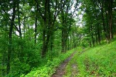 Percorso nella foresta Immagini Stock Libere da Diritti