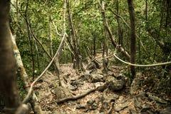 percorso nella foresta Fotografia Stock