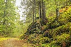 percorso nella foresta Fotografie Stock Libere da Diritti