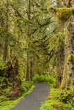 Percorso nella foresta Immagine Stock